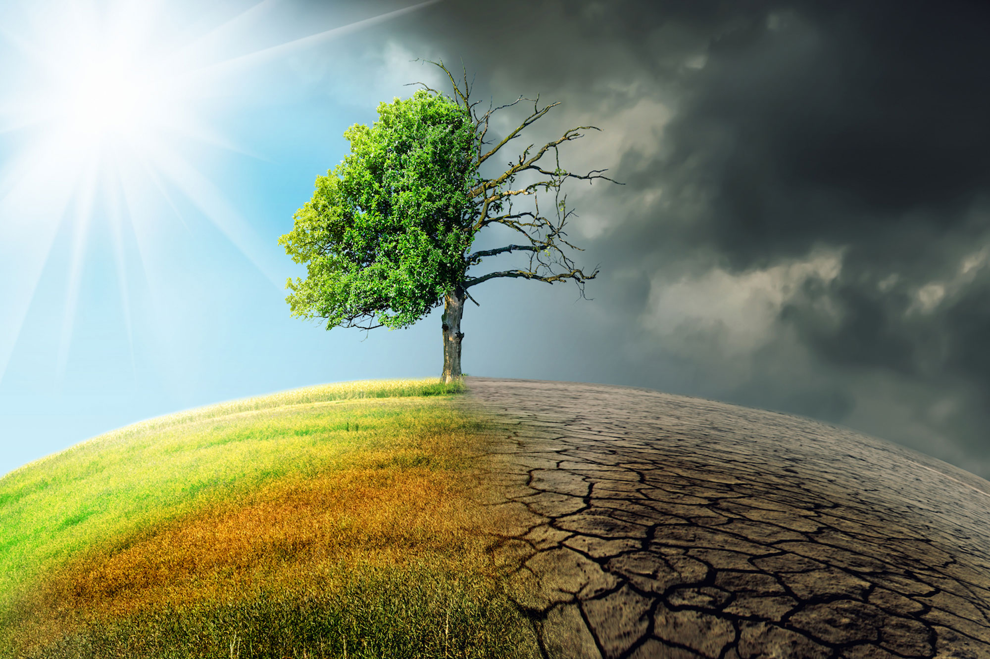 Harvard-scientist-We-have-5-years-to-mitigate-the-worst-of-climate-change